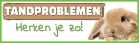 Hoe herken je tandproblemen bij konijnen?