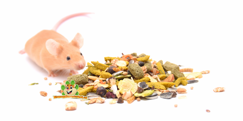 mouse webshop for mouse food