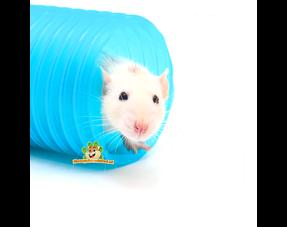 Rats Health