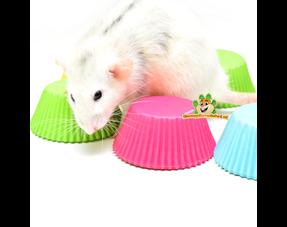 Rat food bowls