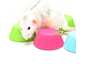 Ratten Voerbakjes
