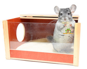 Chinchilla Sandkasten