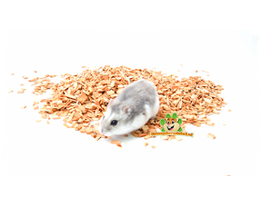 Hamster-Nagmaterial