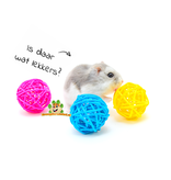 Gekleurde Wilgenballen 3,5 cm