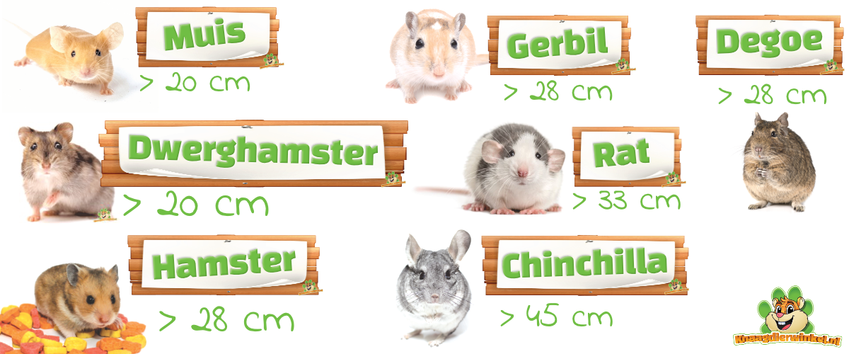 running wheels for rodents such as mouse, dwarf hamster, hamster, gerbil, rat, chinchilla, degu