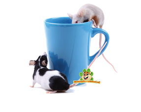 Mäuse trinken Flaschen