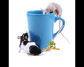 Mäuse Trinkflaschen & Wassernäpfe