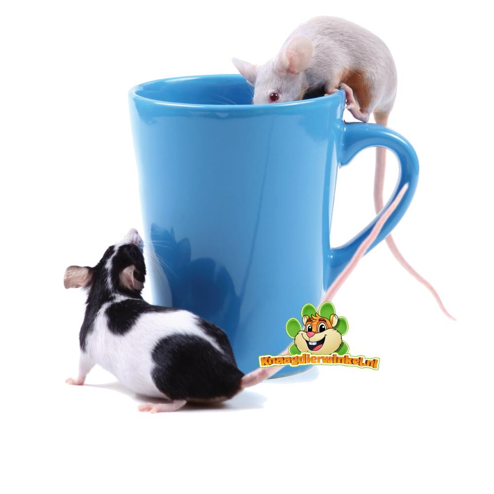 Trinkflaschen für Mäuse