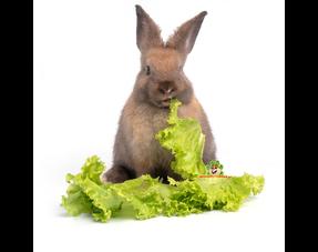 Kaninchen Kräuter