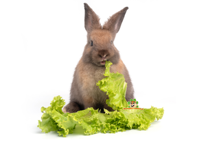 Rabbits Herbs