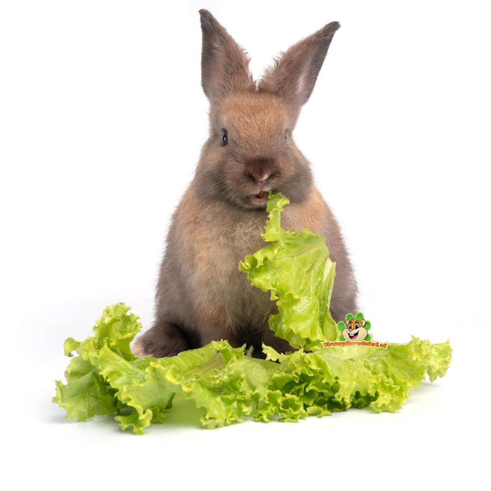 konijnenvoeding en kruiden