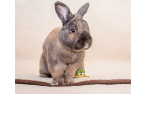 Bottom mats Rabbit