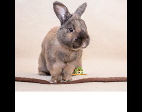 Fußmatten Kaninchen
