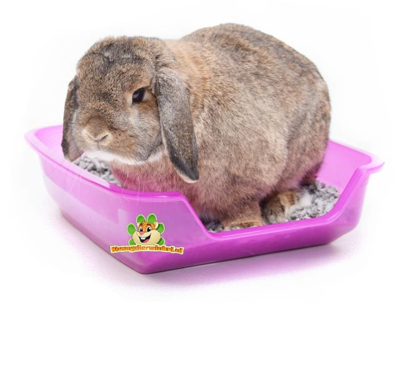 rabbit toilet bed