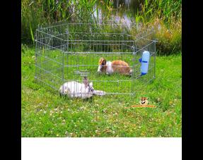 Kaninchenlauf