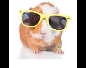 Meerschweinchen-Sommerprodukte