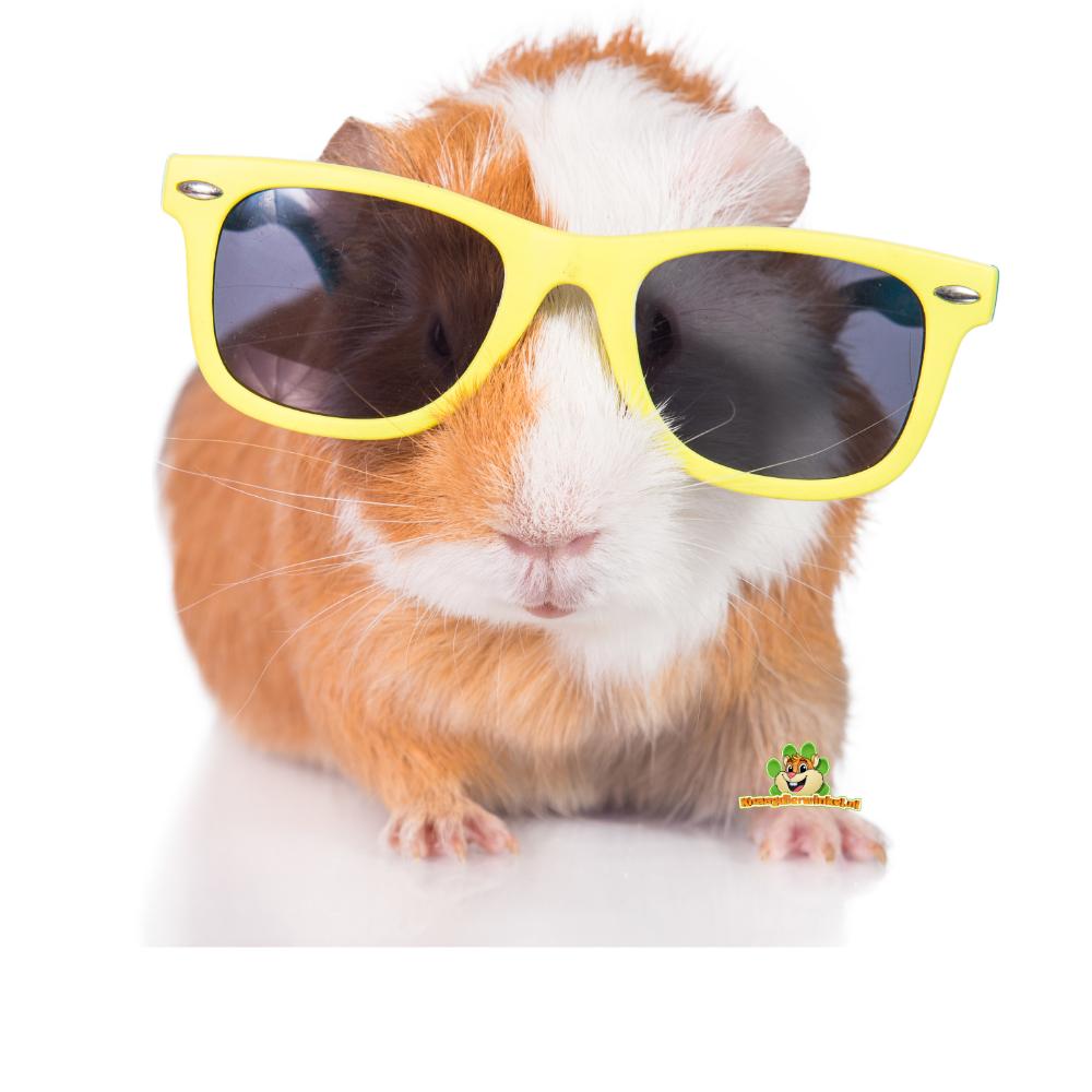 meerschweinchen sommerprodukte warme tage kühlen