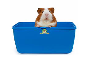 Guinea pig transport box
