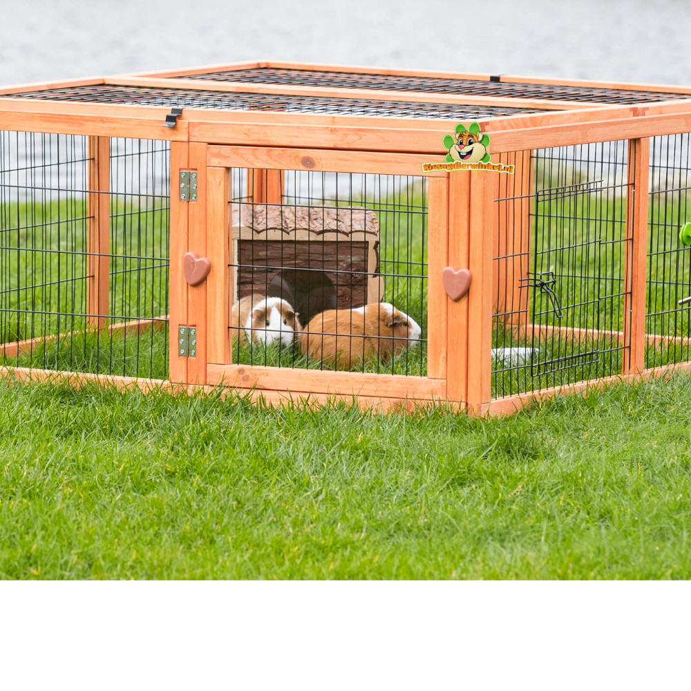 guinea pigs for indoor and outdoor guinea pigs