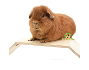 Guinea Pig Plateaus and Ladders