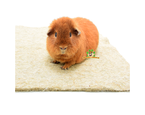 Guinea Pig Floor Mats and Plasmat