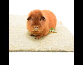 Meerschweinchen-Fußmatten und Plas-Matten