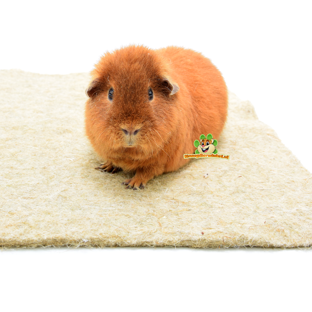 guinea pig plasmat and bottom mat
