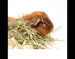 Guinea Pig Hay