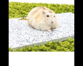 Hamster Zomerproducten