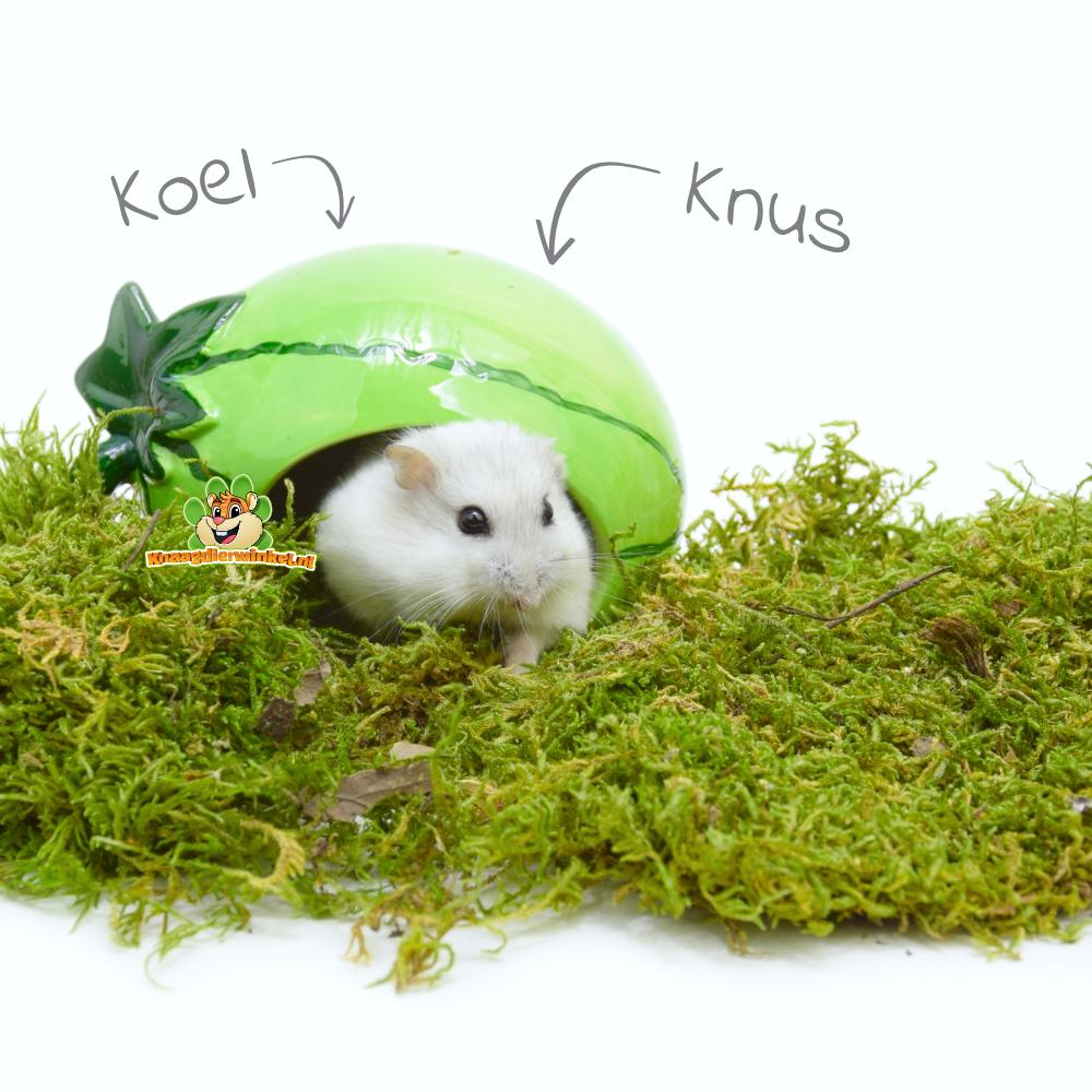 Happy Pet Keramische Hausmelone