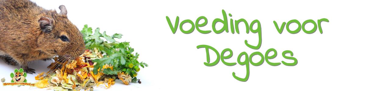 Dego Versorgung und Ernährung für Degus