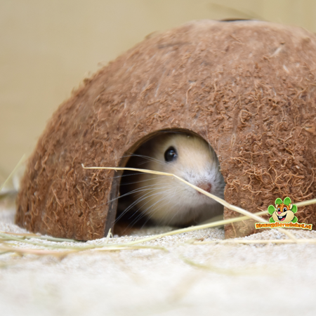 Trixie Halb Coconuts (3 Stück)