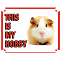Guinea pig guinea pig This is my hobby