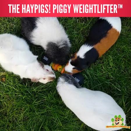 HayPigs Zirkus Meerschweinchen Veggie Halfter 22 cm