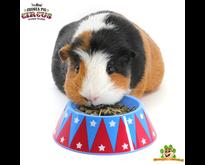 Circus Food Bowl