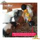 HayPigs Circus Guinea Pig Veggie Halter 22 cm