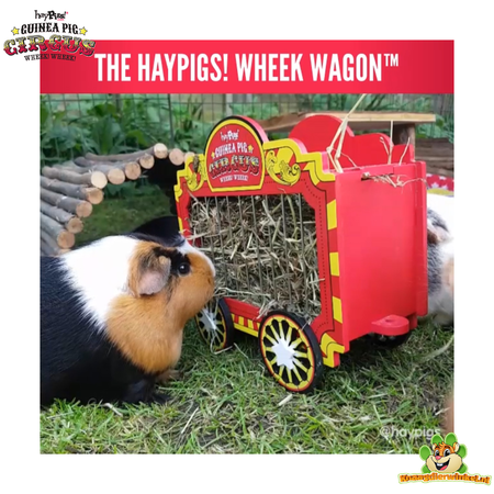 HayPigs Circus Hooiwagen 23 cm