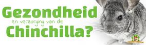 Gezondheid en verzorging van de Chinchilla