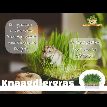 Trixie Knaagdiergras 100 gram