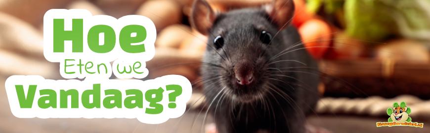 Voedselverrijking voor Ratten