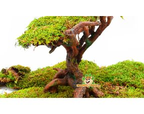 Hamsterscaping Bonsai Tree