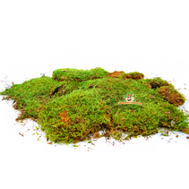 Dried Moss 400 grams