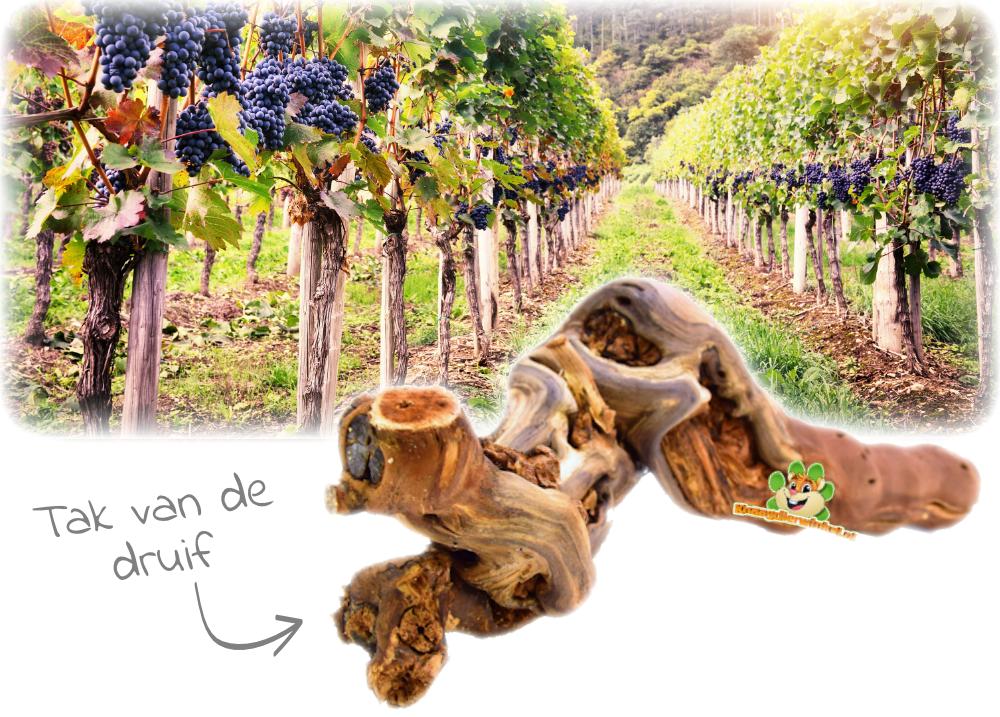 wijnrank voor het hamsterscapen