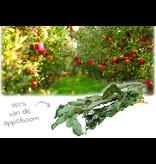 JR Farm Appelboom Oogst