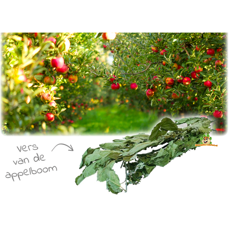 JR Farm Apple Tree Harvest