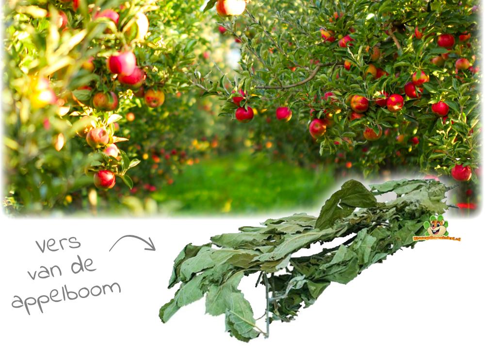 Apfelbaum Ernte Nagetier und Kaninchen