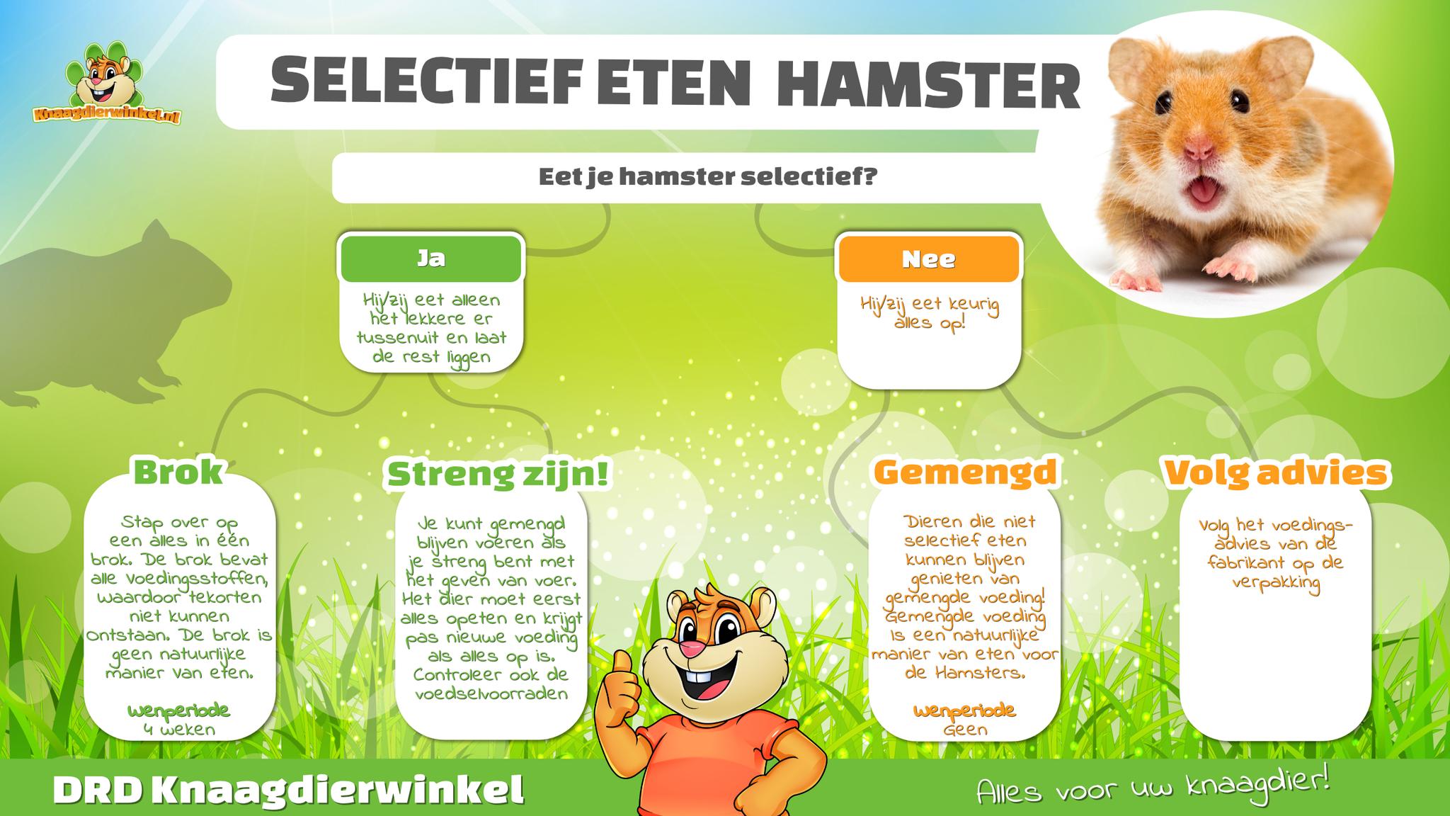 selektiv Zwerghamster Hamster essen