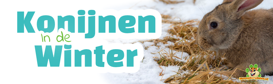 Konijnen in de winter