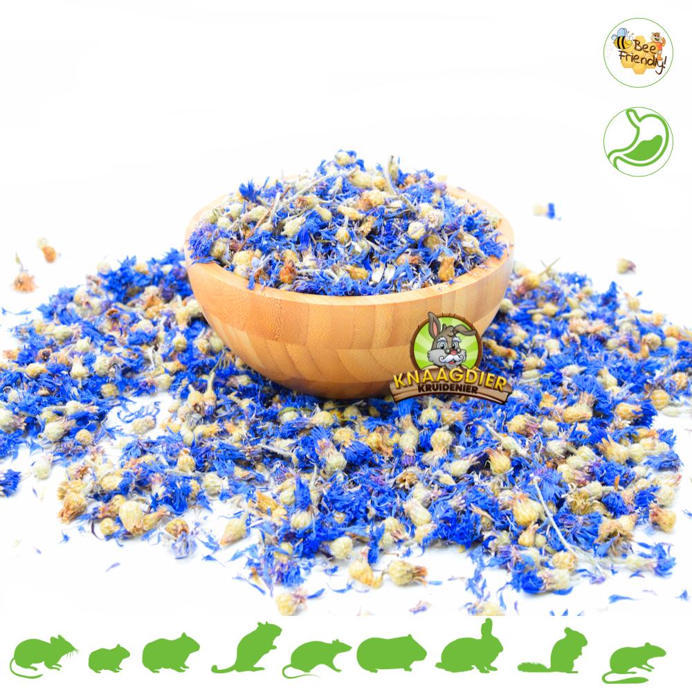 Knaagdier Kruidenier Getrocknetes Kornblumenblau