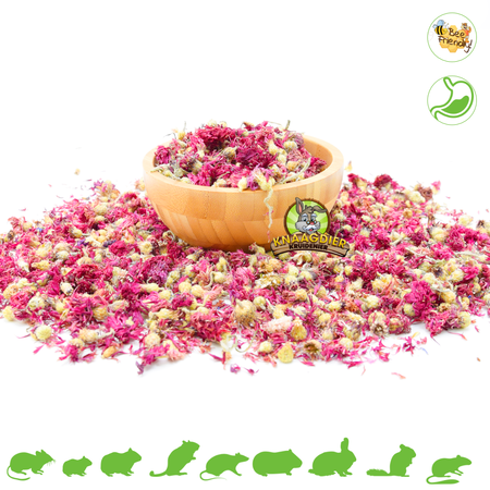 Knaagdier Kruidenier Dried Cornflower Red